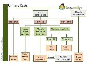 American Board of Internal Medicine Maintenance of Certification Review - Urinary Casts