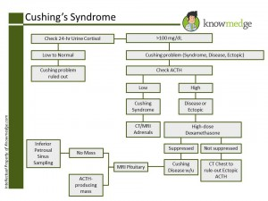 Medical Board Review - ABIM / USMLE Cushings Workup