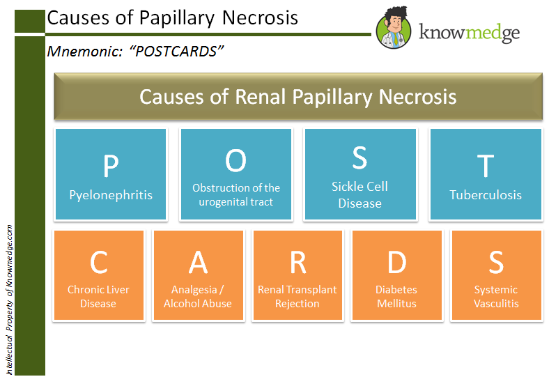 Internal Medicine Board Review and Medical Mnemonics for Causes of Papillary Necrosis - POSTCARDS
