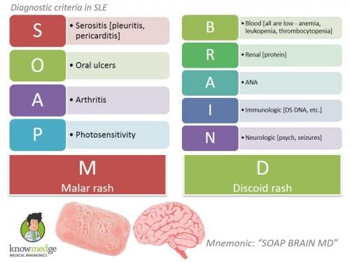 SLE-Diagnosis-SOAP-BRAIN-MD